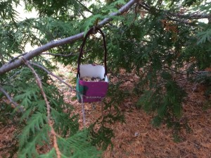 Our feeders in the enchanted forest!